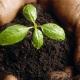 grow-420x420_c